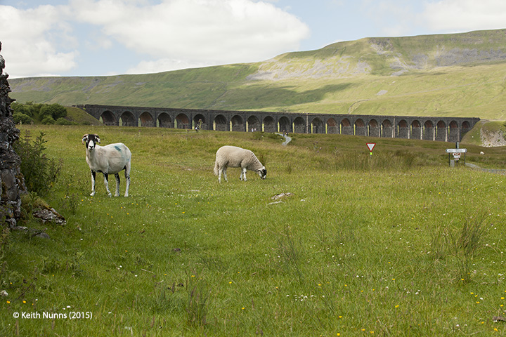 247780: Bridge SAC/66 - Ribblehead Viaduct: Context view from the south east